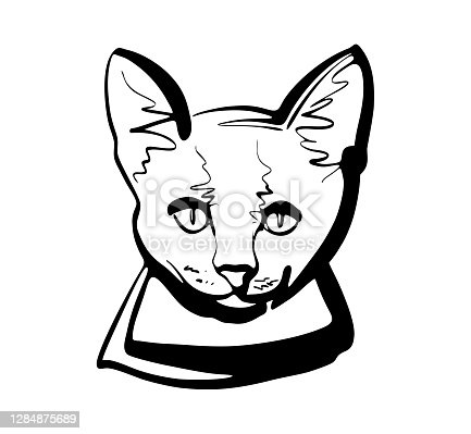 istock The logo sign. The Mouser cat 1284875689