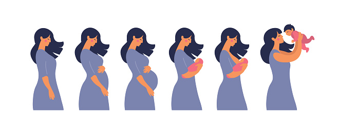 The main stages of pregnancy and motherhood. Set for infographics and animation. Pregnancy, mother with newborn, breastfeeding. Flat stock vector illustration isolated on white background.