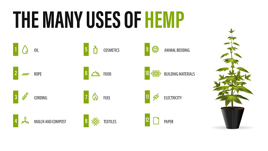The many uses of hemp, white poster with infographic of uses of cannabis and greenbush of cannabis plant