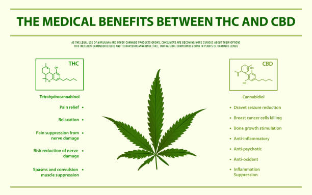 The medical benefits between THC and CBD horizontal infographic The medical benefits between THC and CBD horizontal infographic, healthcare and medical illustration about cannabis exocrine gland stock illustrations
