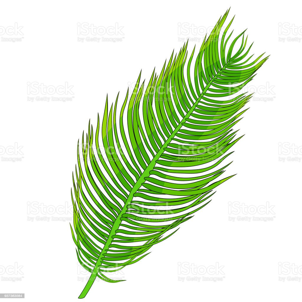 the natural tropical palm leaves vector illustration stock vector rh istockphoto com summer palm tree leaves vector palm tree leaves vector png