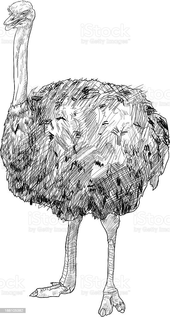 The ostrich royalty-free the ostrich stock vector art & more images of africa