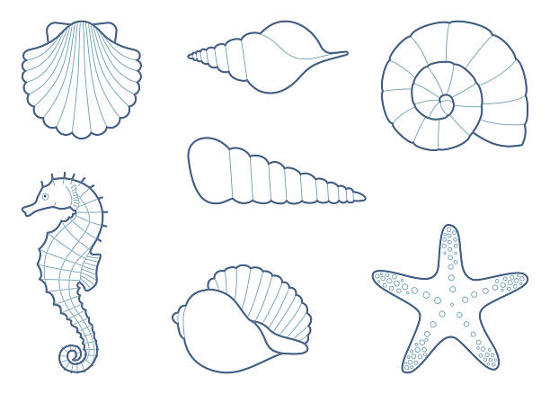 stockillustraties, clipart, cartoons en iconen met the outlines of sea creatures - zeeschelp