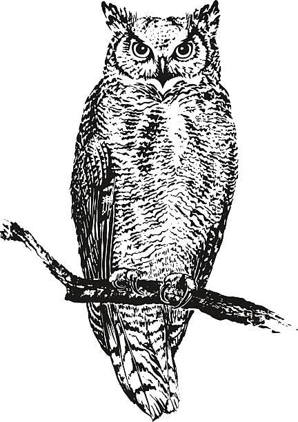 stockillustraties, clipart, cartoons en iconen met the owl sitting on a branch. vector illustration - uil