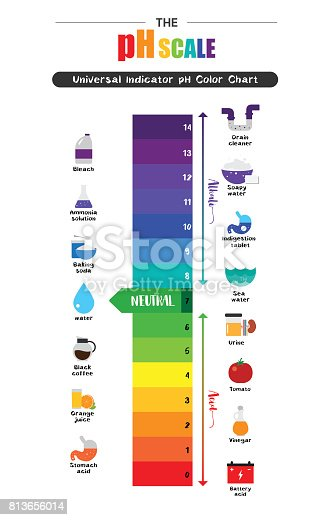 The Ph Scale Universal Indicator Ph Color Chart Diagram Stock Vector Art  U0026 More Images Of Acid