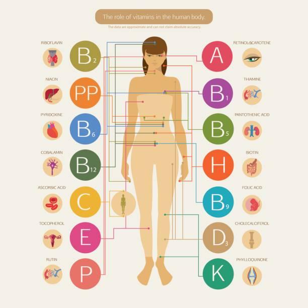 illustrations, cliparts, dessins animés et icônes de le rôle des vitamines - antioxydant