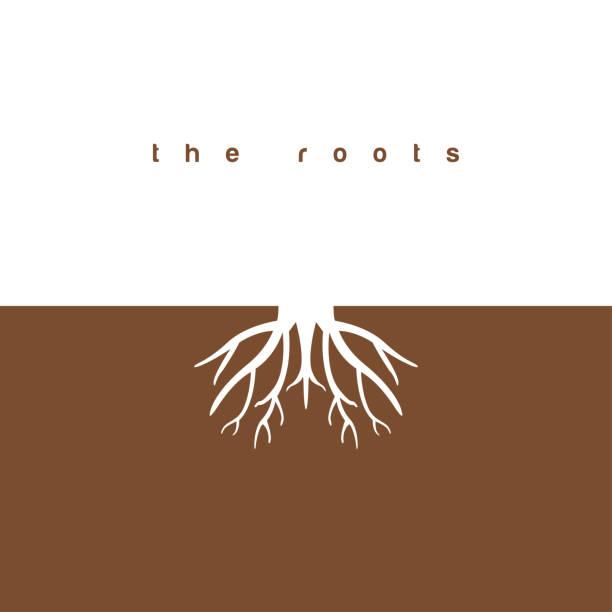 illustrazioni stock, clip art, cartoni animati e icone di tendenza di the roots graphic design template vector illustration - radice
