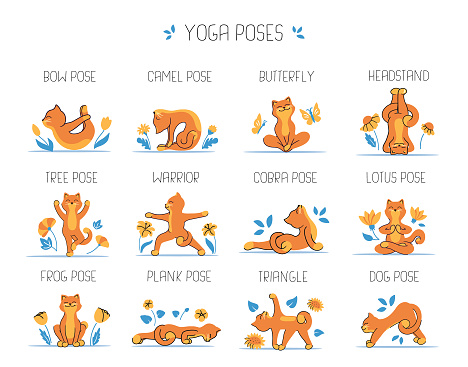 The set of cats and yoga. The collection of funny animals is good for logo designs