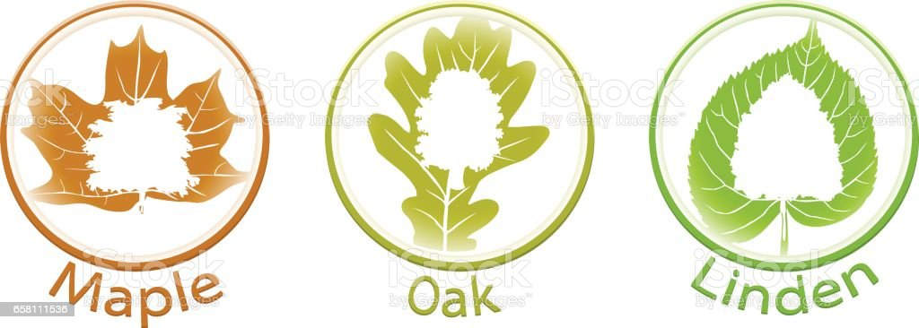 The set of round icons of trees and leaves (linden, oak and mapl royalty-free the set of round icons of trees and leaves linden oak and mapl stock vector art & more images of agriculture