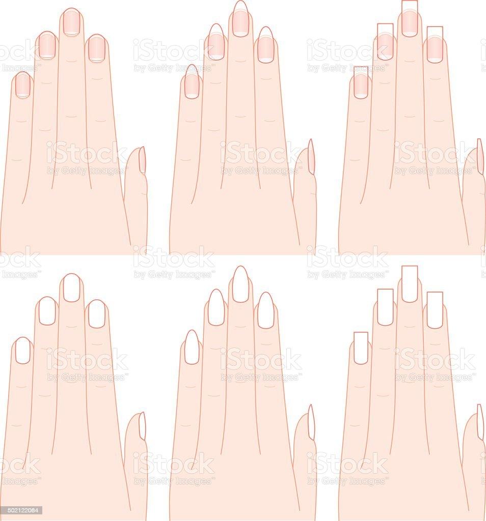 Ilustración de La Forma De Manos Y Uñas y más banco de imágenes de ...