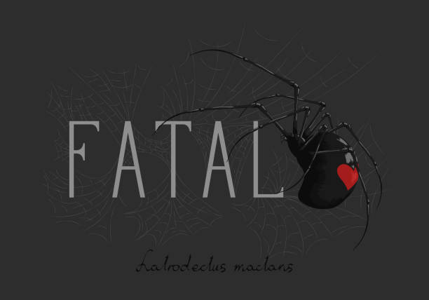 c 蜘蛛的口號。拉丁黑寡婦的銘文 (蜘蛛名)。向量藝術插圖