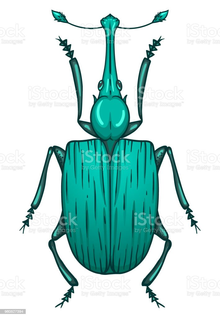 The snout beetle (Curculionidae). vector art illustration