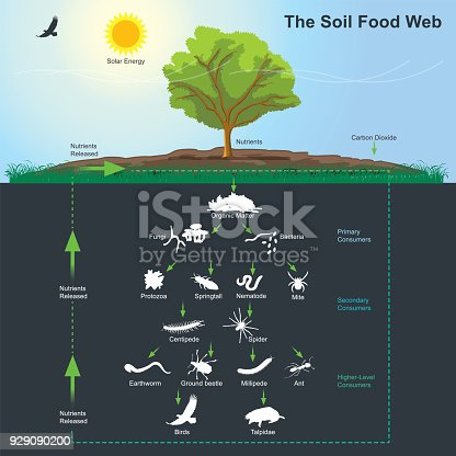 The soil food web is the community of organisms living all or part of their lives in the soil. It describes a complex living system in the soil and how it interacts with the environment, plants, and animals. Illustration info graphic.