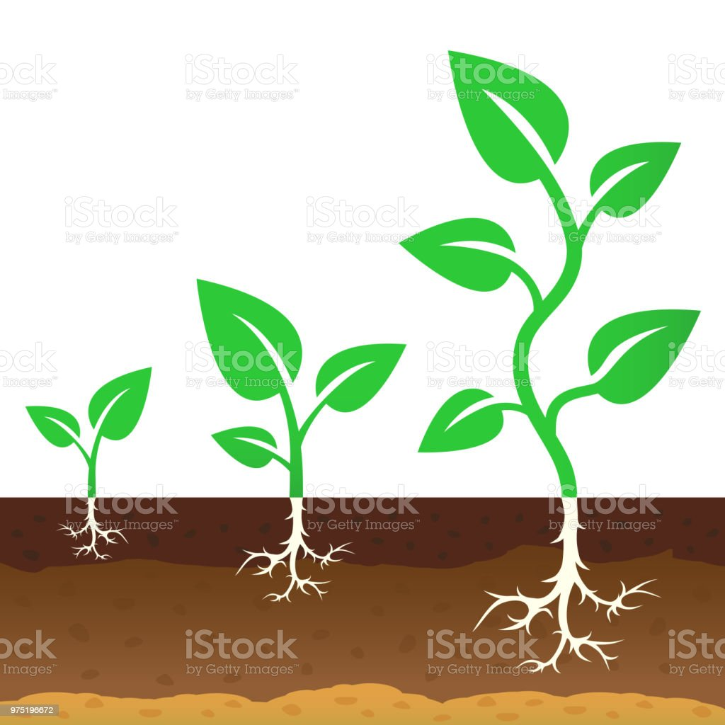 The stage of growth of a sprouts. Vector illustration vector art illustration