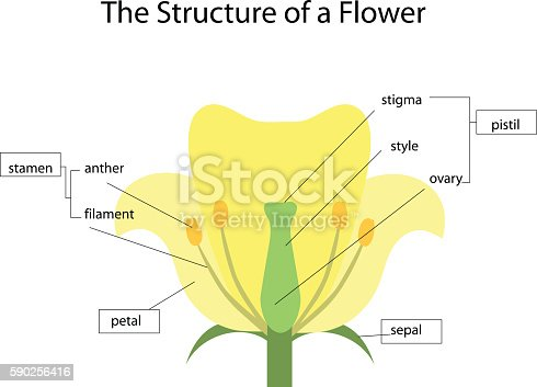 the structure of a flowe