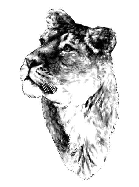 the tiger head looks in the direction of three quarters – artystyczna grafika wektorowa