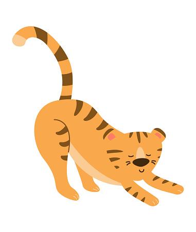 O tigre está fazendo exercícios, estressando. Imagem vetorial.