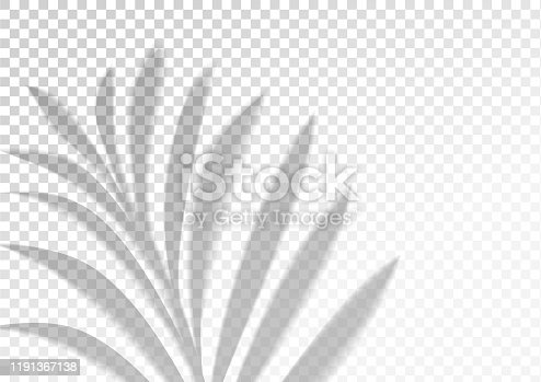 The transparent shadow overlay effect. Tropic leaf. Mockup with overlay a palm leaf shadow. Natural lighting overlays shadow on top. Scene of palm branch Shadow from the window. Realistic vector.