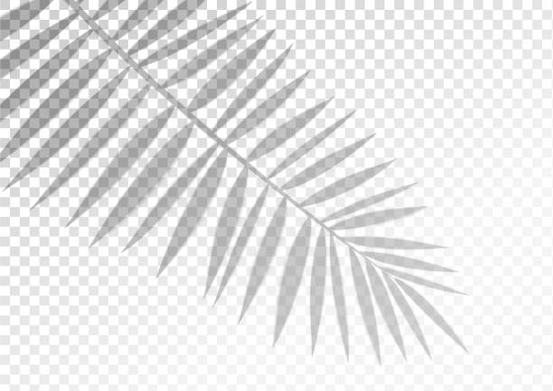 The transparent shadow overlay effect. Tropic leaf The transparent shadow overlay effect. Tropic leaf. Mockup with overlay a palm leaf shadow. Natural lighting overlays shadow on top. Scene of Tropical Leaf Shadow from the window. Realistic vector. focus on shadow stock illustrations