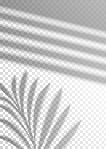 The transparent shadow overlay effect. Tropic leaf The transparent shadow overlay effect. Tropic leaf and window blind. Mockup with overlay a palm leaf shadow. Natural lighting overlays shadow on top. Scene of Shadow from the window. Realistic vector focus on shadow stock illustrations