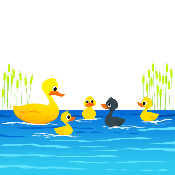 The Ugly Ducking- Aesop's Fairy Tale. The Ugly Ducking- Aesop's Fairy Tale. Vectoral Illustration for Children Books, magazines, Web Pages and Blogs. White Background Isolated ducking stock illustrations