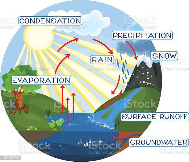 Free Water Cycle Diagram Vector Download Free Vectors