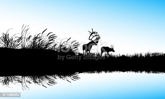 Elk and deer by the odge of a pong with blue colored water