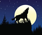 The wolf howling on the full moon at night.