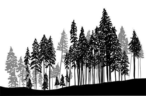 Thick Forest Trees