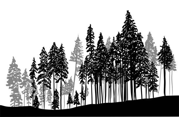 Dicke Waldbäume – Vektorgrafik