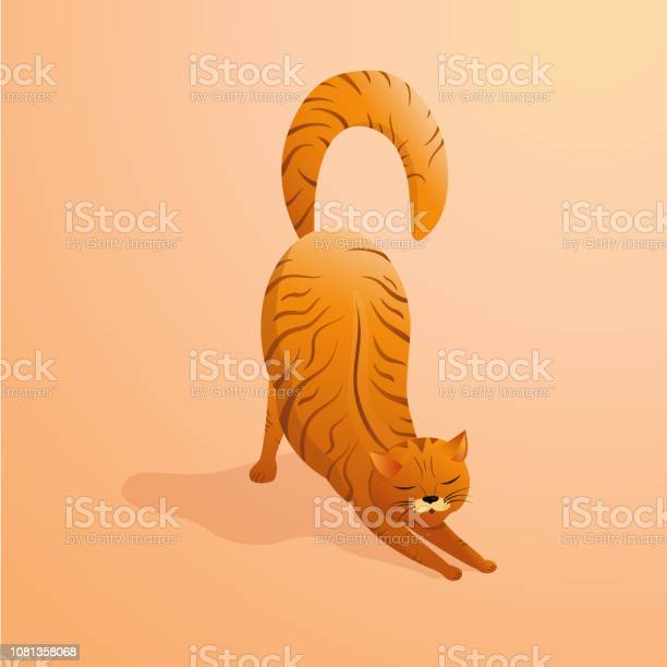Thick striped red cat stretches sleepily a pet with a long fluffy vector id1081358068?b=1&k=6&m=1081358068&s=612x612&h=dbsfbsh6oiizh2n1rhwegkqnl0kvdzgwps5kdzrhlxe=