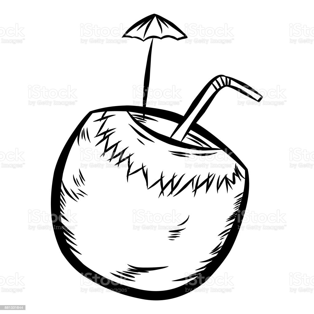 Royalty Free Coconut Water Cartoon Clip Art Vector Images Rh Istockphoto Com Clipart Black And White Shell