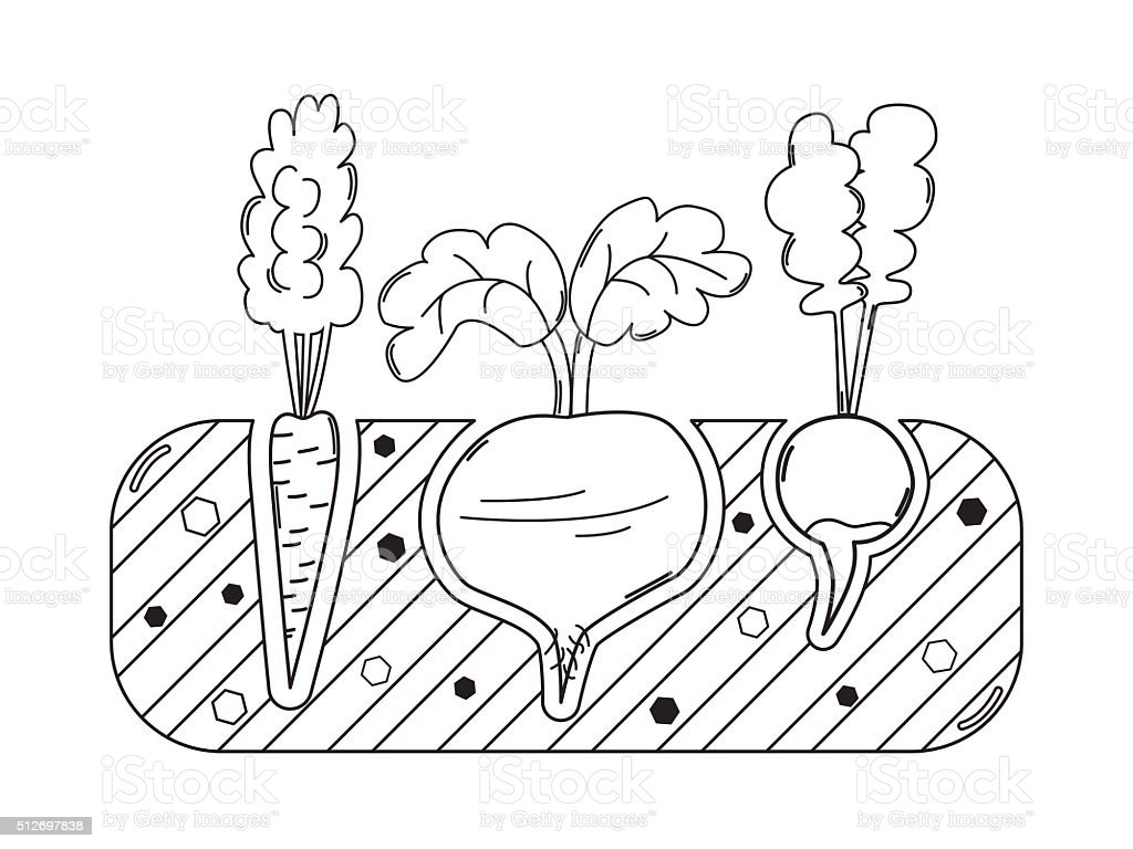 Thin line gardening bed with vegetables vector art illustration