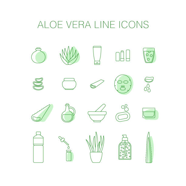 Thin line icon set - aloe vera plant and products Thin line icon set - aloe vera plant and products, big set of fiiled outline design healthcare and cosmetology objects isolated on the white background, vector illustration love potion stock illustrations