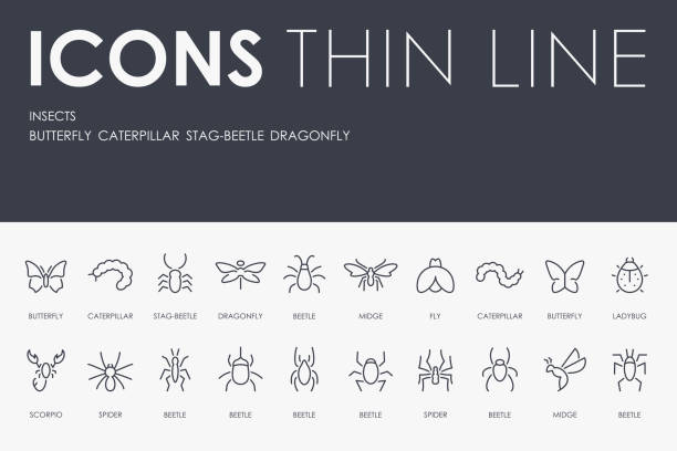 insects thin line icons - bugs stock illustrations, clip art, cartoons, & icons