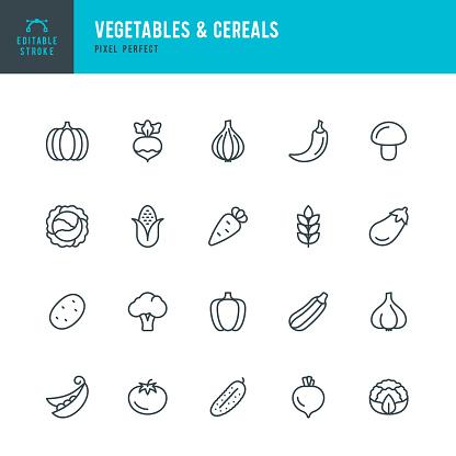 VEGETABLES & CEREALS - thin line vector icon set. Editable stroke. Pixel perfect. The set contains icons: Broccoli, Cauliflower, Carrot, Cabbage, Green Pea, Corn, Tomato, Potato, Pumpkin, Pepper, Onion.