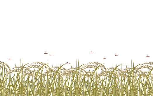 This is an illustration of rice plants and red dragonflies in full bloom.
