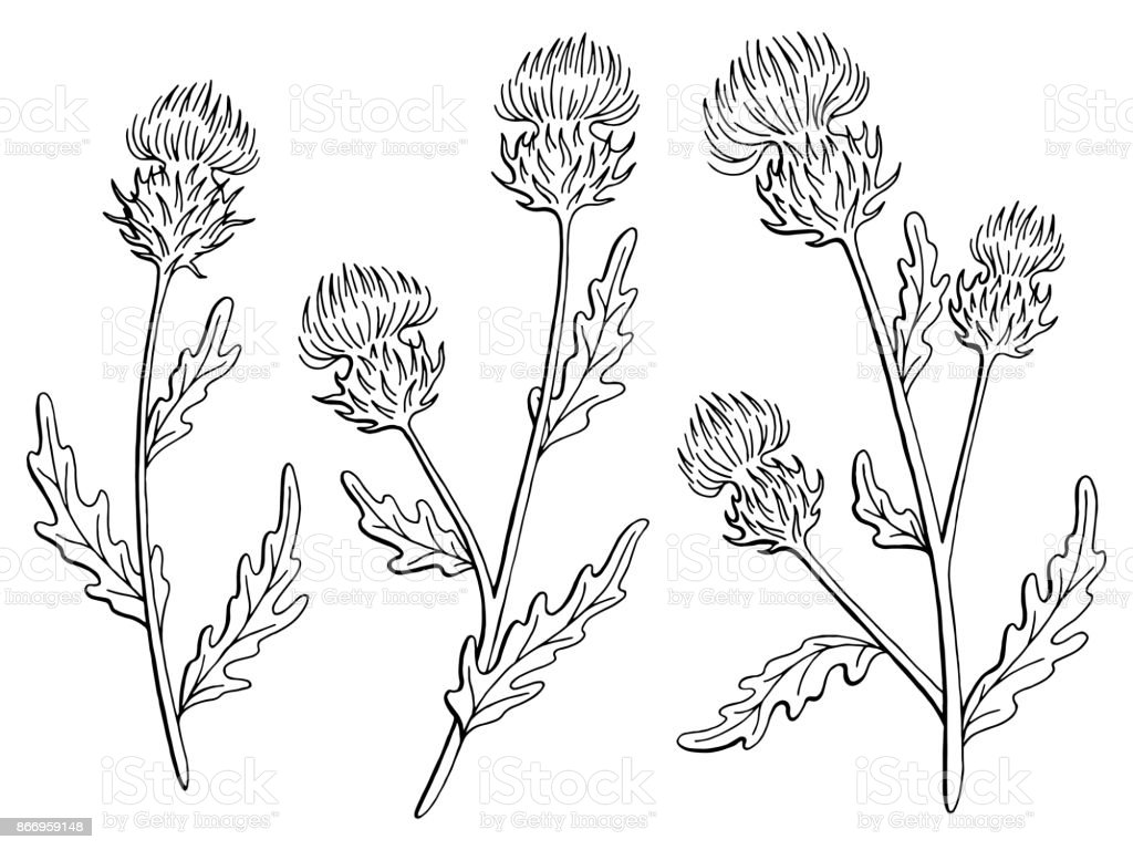 Thistle Flower Graphic Black White Isolated Sketch Illustration