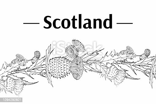 Thistle. Onopordum acanthium. Scottish Thistle isolated on white, vector illustration. Template for invitation, poster, flyer, banner, etc.