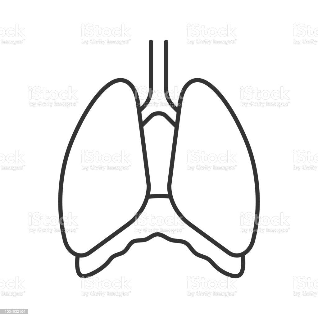 Brusthöhle Symbol Stock Vektor Art und mehr Bilder von Atemhilfe ...