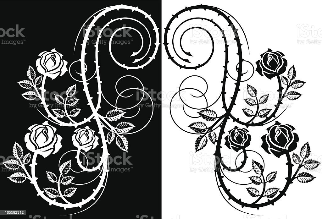 Thorny rose design element vector art illustration