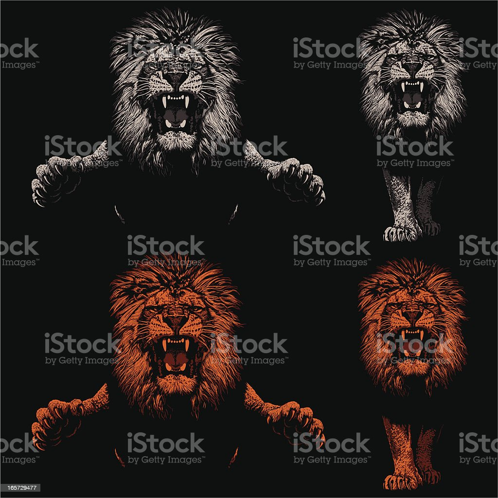 Threatening Lions - Light and Shadow vector art illustration