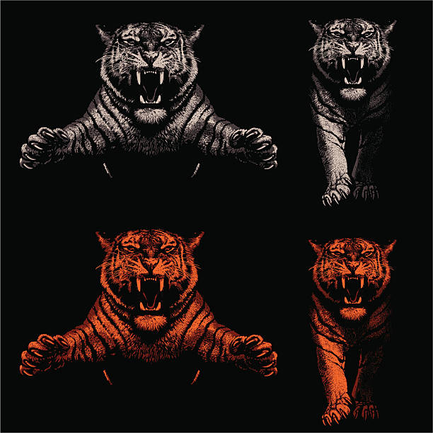 stockillustraties, clipart, cartoons en iconen met threatening tigers - light and shadow - tijger
