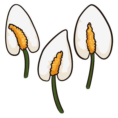 Three anthurium flower samples in cartoon style