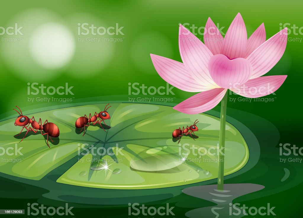 Three ants above the waterlily plant royalty-free stock vector art