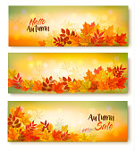 Three Autumn Sale Banners With Colorful Leaves. Layered Vector