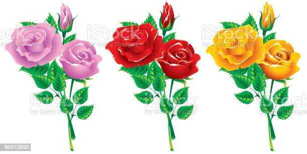Three bouquets of roses vector id95910690?b=1&k=6&m=95910690&s=612x612&h=gh gyoqzsbj3boakasp4e3qrjuuzfj2ykxytqvmjcco=