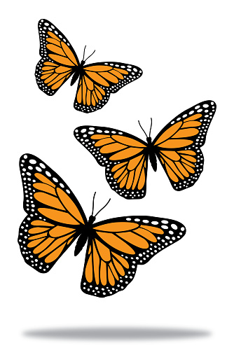 Three Butterflies With Shadow