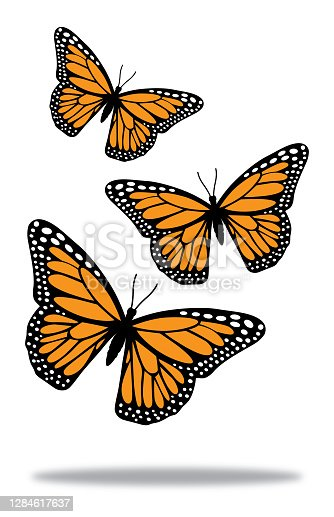 Vector illustration of three flying monarch butterflies above a shadow.