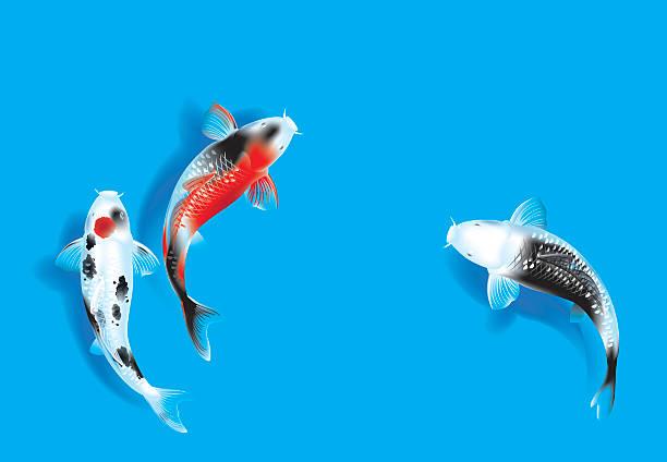 stockillustraties, clipart, cartoons en iconen met three carps on blue - carp